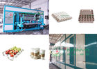 Pulp Molded 600m2 Paper Egg Tray Manufacturing Machine